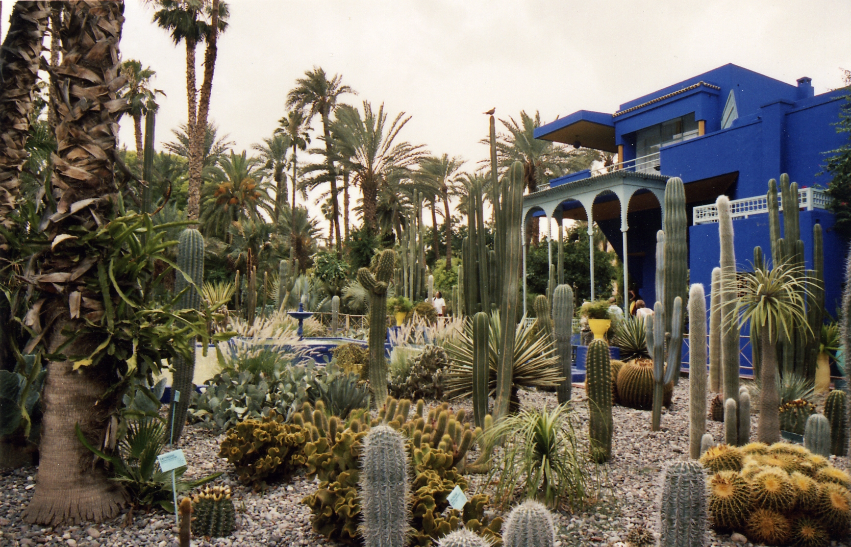 February 2009 archives travel exploration blog travel for Jardin ysl marrakech