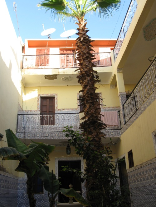 tree-in-courtyard-of-house